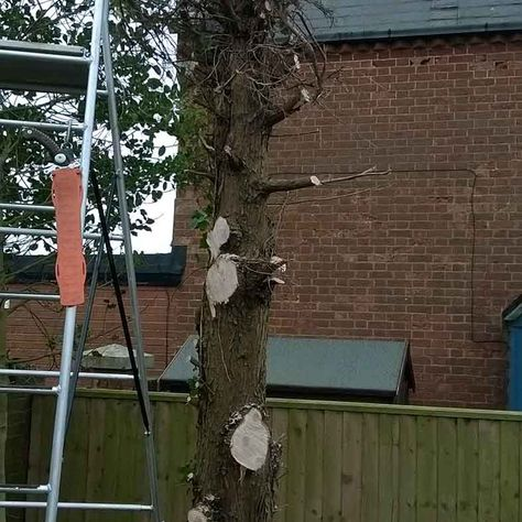 tree cutting in garden